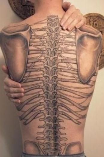 colonne vertebrale.jpg