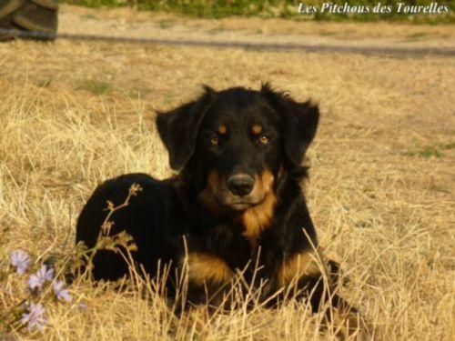 EMI : notre chienne polyvalente