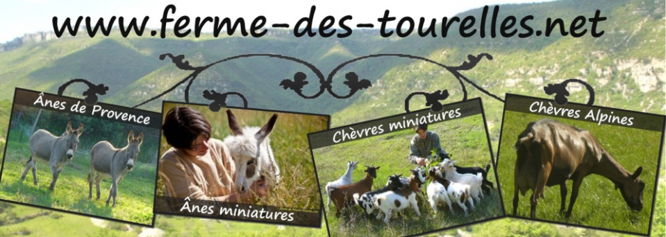 www.ferme-des-tourelles.net  -  Nos CHEVRES ALPINES