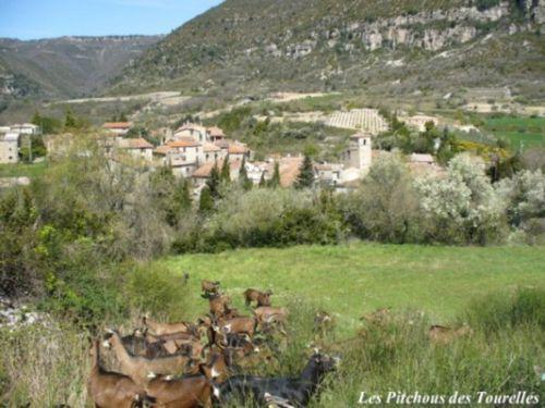 Les chèvres dnas un pré à côté de la ferme avec toujours le village et sa vallée en toile de fond