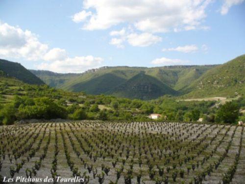 Les vignes et ses paysages