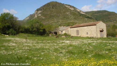 La grande grange vue du champ - côté sud (avec mes ânes miniatures !)