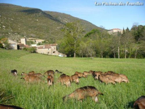 Les chèvres en prairie, le villlage et la ferme !