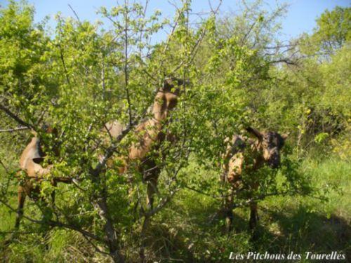 Cache-cache avec un arbuste