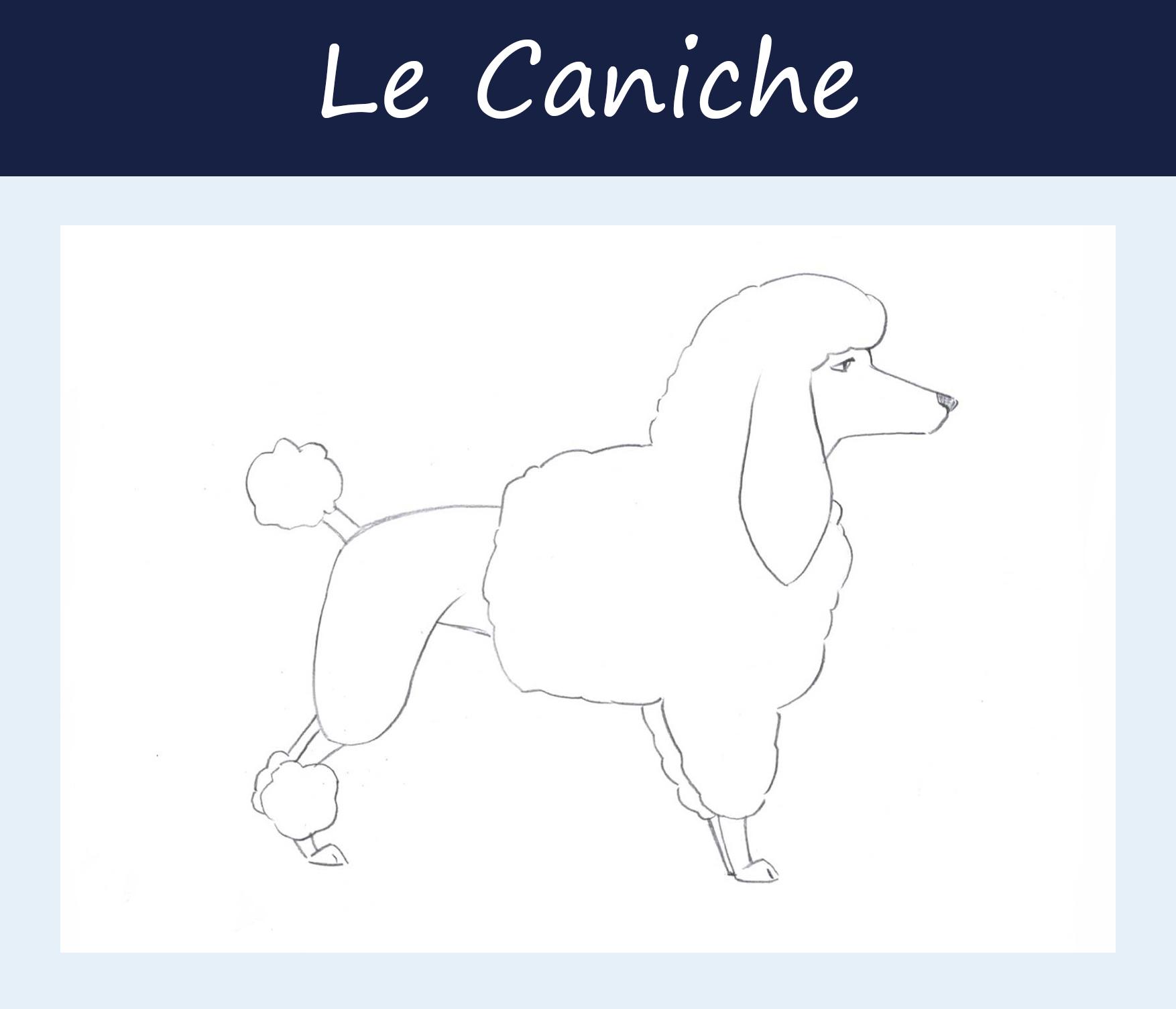 Caniche.jpg