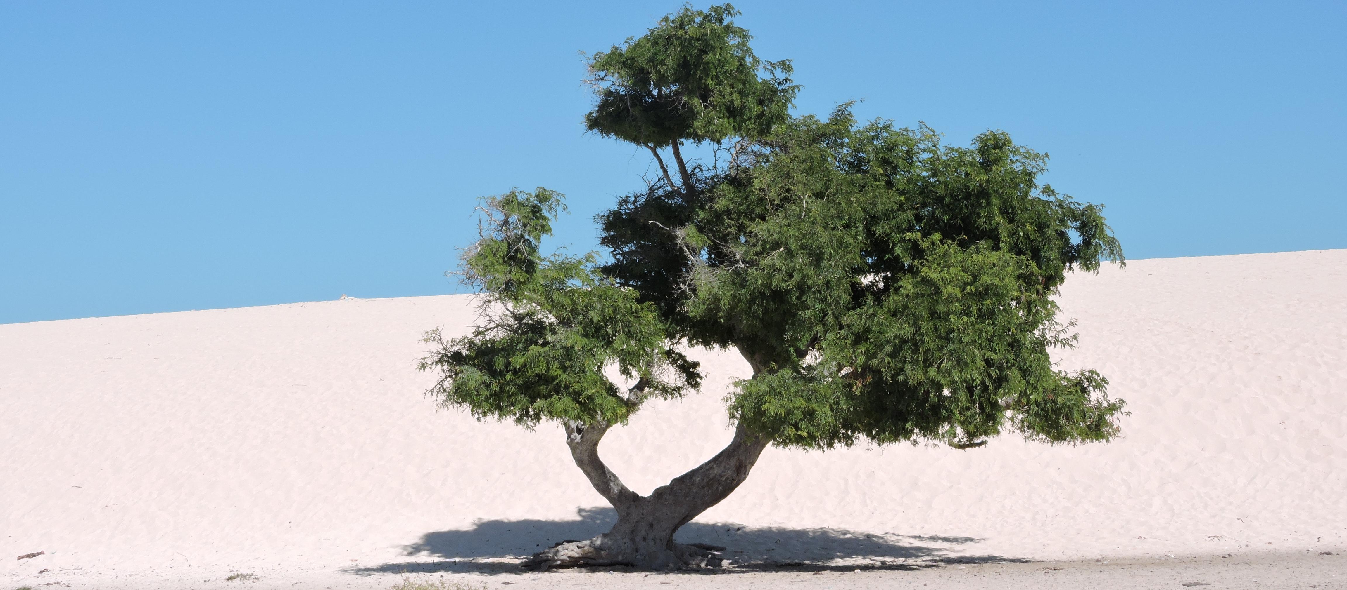 VIVIENNE BAO- MADAGASCAR SENIOR TOUR GUIDE