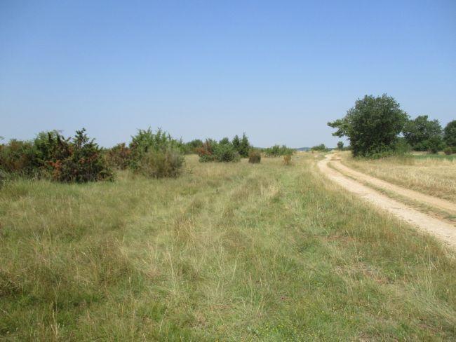 Plateau d'Argentine - La Rochebeaucourt (Photo : Diatox)