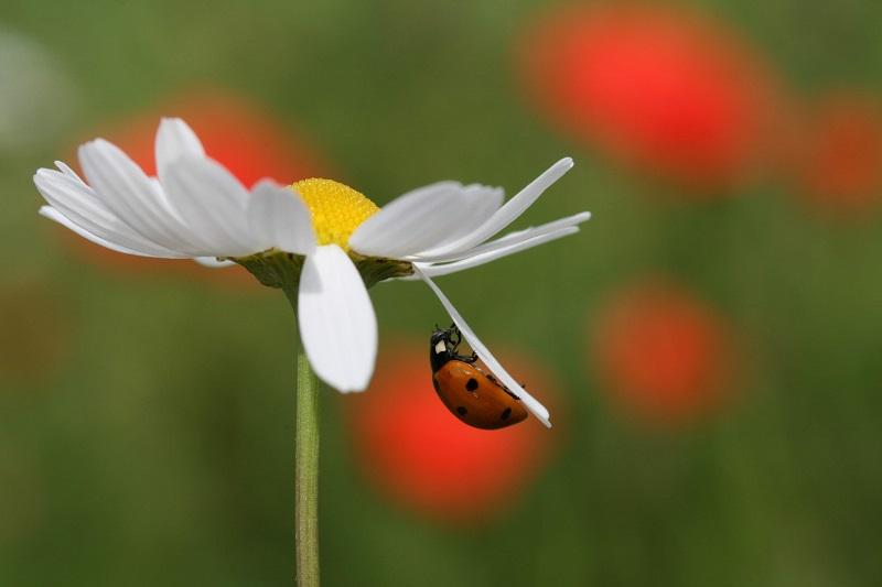 Les alliés du jardinier