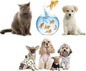 0000000000000000000000000000000000000000000000000000000boutiques-animaux.jpeg