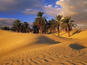 oasis_desert.jpg