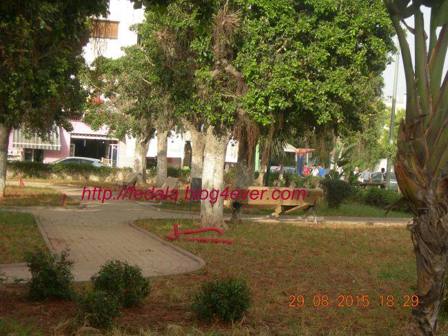 aménagement jardin mosquée rédouane .