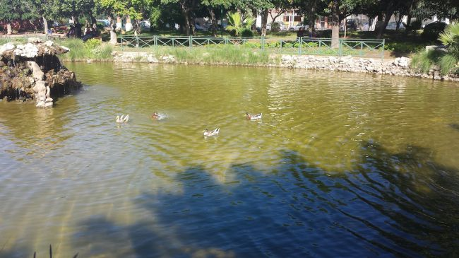le bassin : pour le bonheur des canards