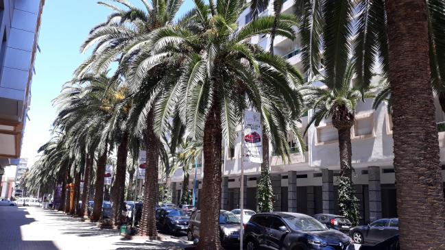 le manque d entretien des palmiers rend le paysage sombre 21 Mai 2019