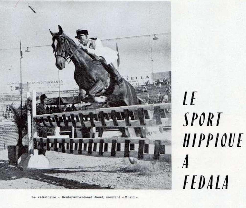 élégance du cheval