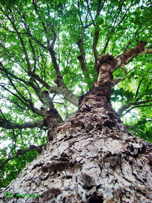 arbre_vu_bas.jpg