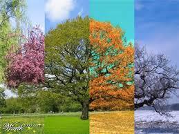 saisons.jpg