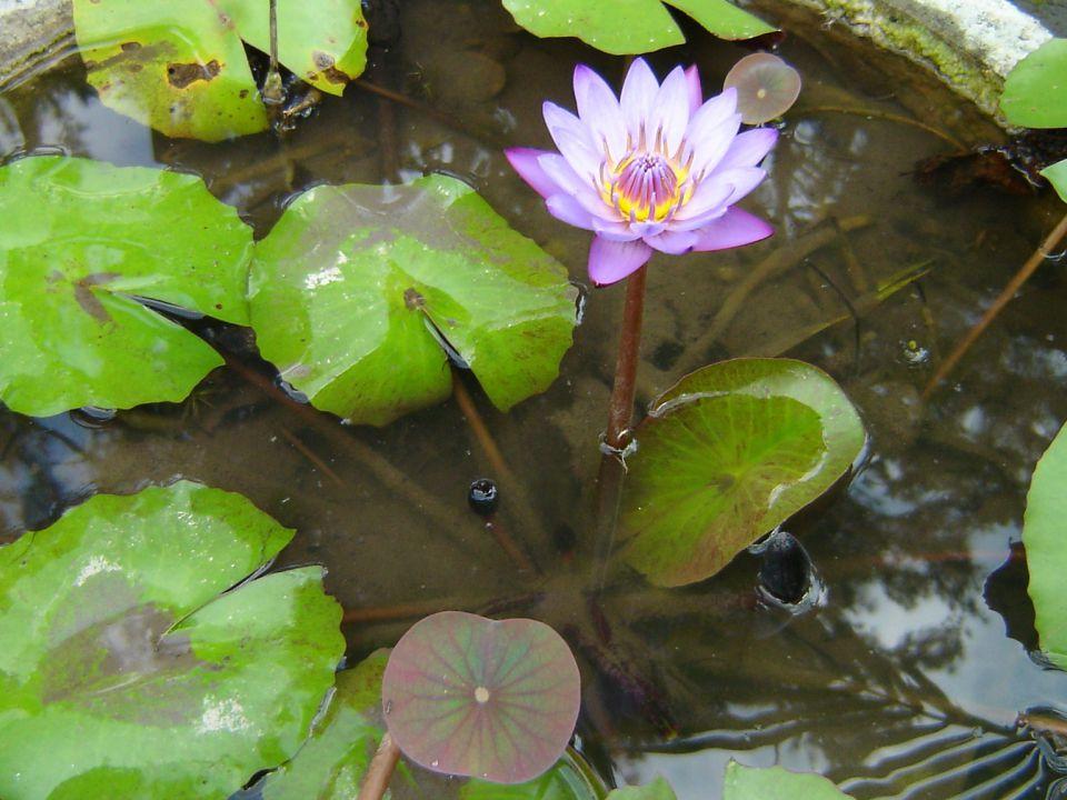 tao blog: pour le feng shui et la philosophie taoïste