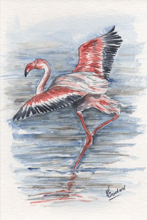 flamant rose / aquarelle