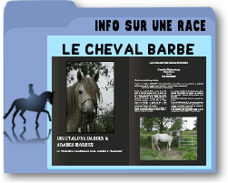 lechevalbarbe.png