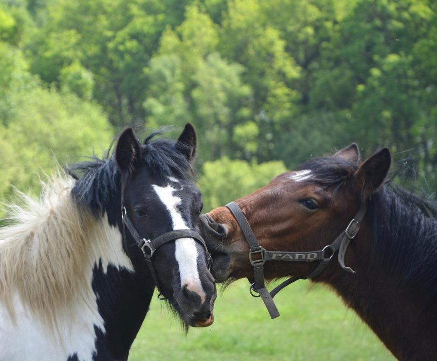 horses-2658713_960_720.jpg