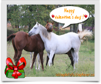 cardhappyvalentinehorse2.png