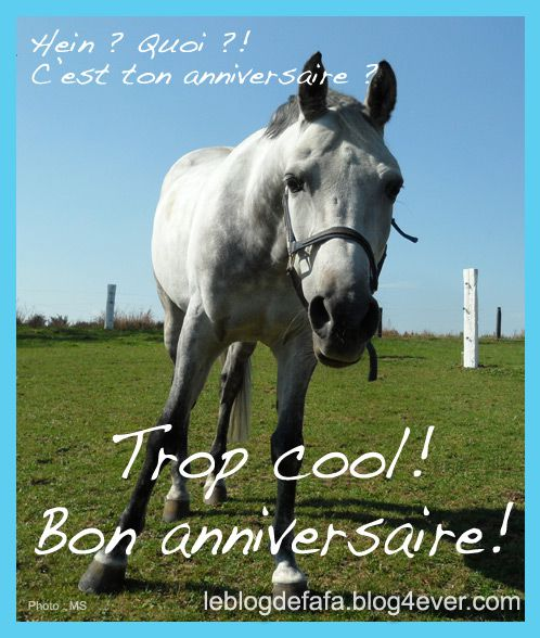Cartes texte le blog des fans de poneys et de chevaux - Image animaux gratuite ...