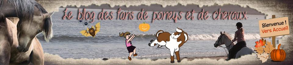 Le blog de Fanny, fan de poneys et de chevaux