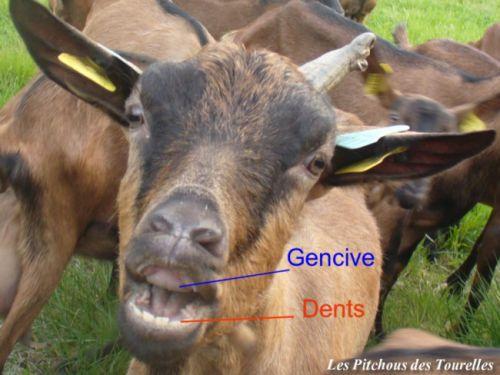 Dentition 711