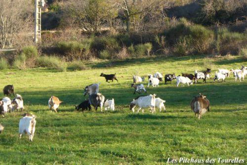 Mon petit troupeau profitant des premiers rayons de soleil en cette fin d'hiver 2013 !