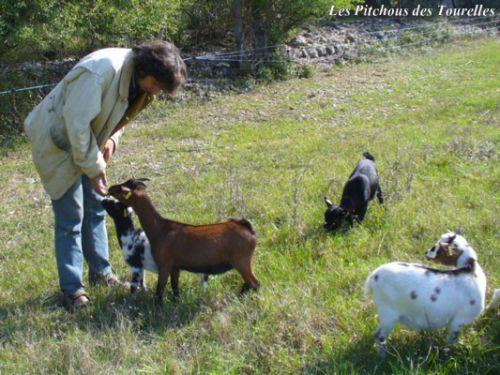 Ambre a vite remarqué l'attention d'Eric et a accouru... Eglantine et Fleur ne vont pas tarder à les rejoindre !