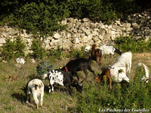 Ahhh, dur dur la vie de chèvres naines !