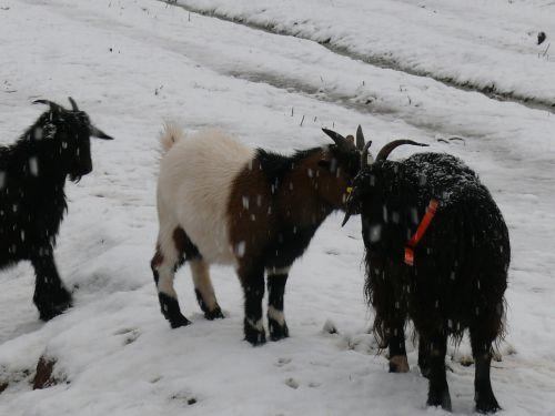 neige à gonfaron  (photoAR)