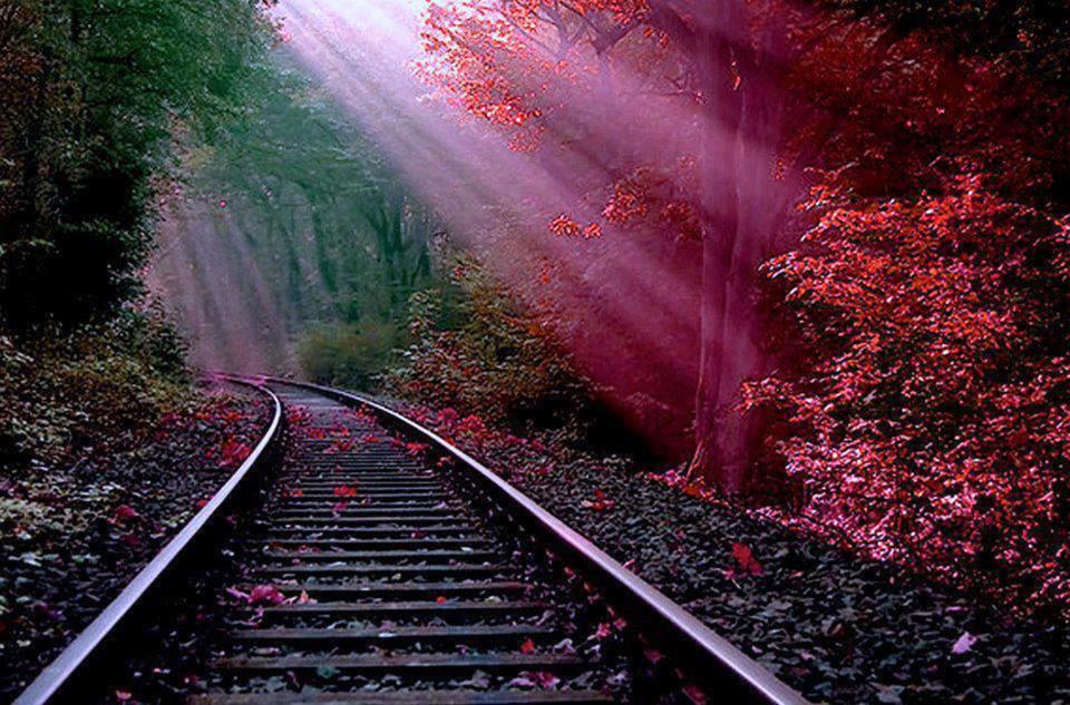 rails-automne.jpg