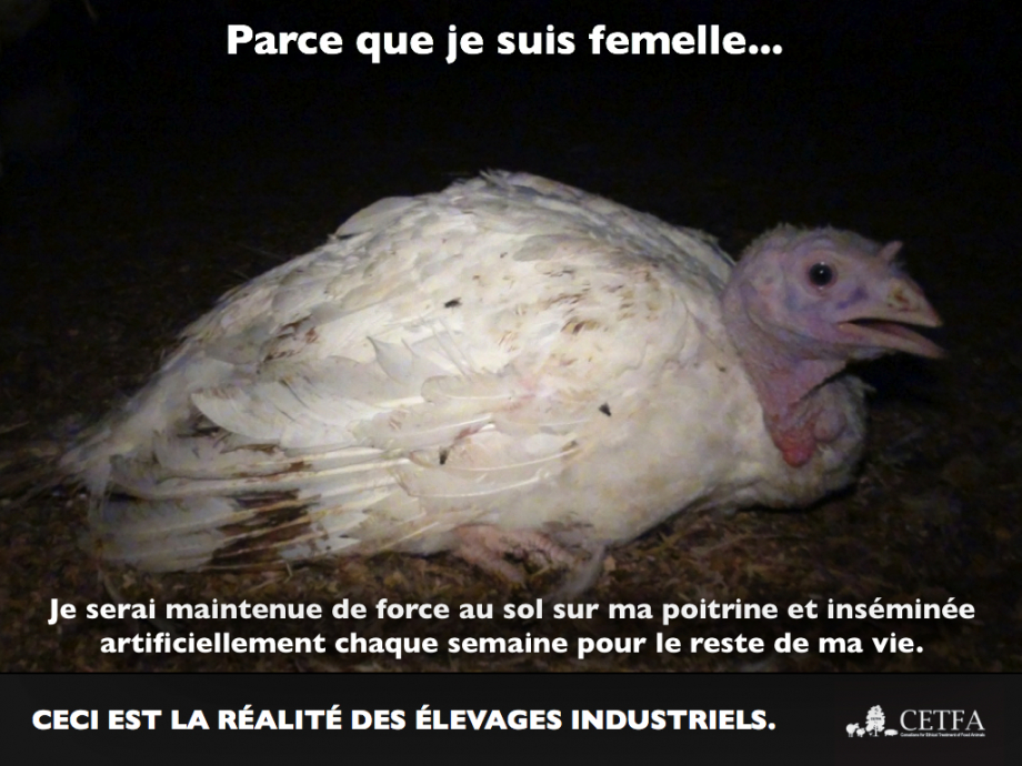 because-im-a-girl-turkey-hen-french-004.jpg