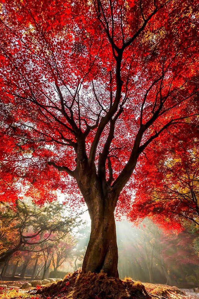 arbre94490948_3093533104024388_5369566502846464000_o.jpg