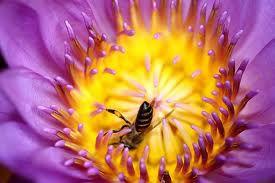 initiatives pour sauver les abeilles kit gratuit parrainage de ruches stages de construction. Black Bedroom Furniture Sets. Home Design Ideas