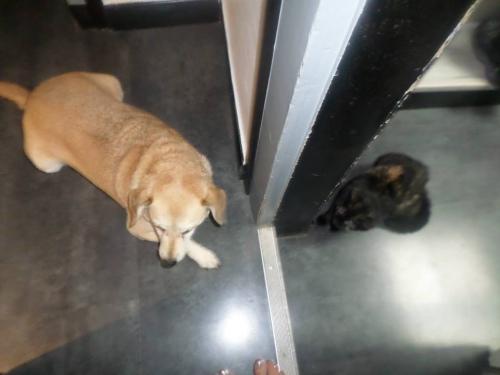 ruby et chien 1.jpg