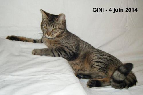 GINI.jpg