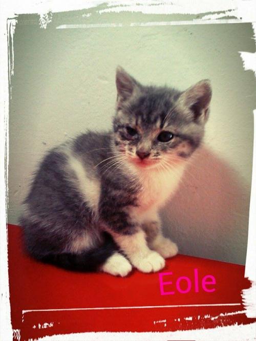 eole.jpg