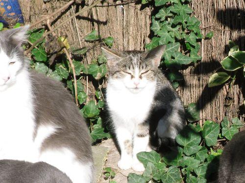 Les chats de la région de Lens
