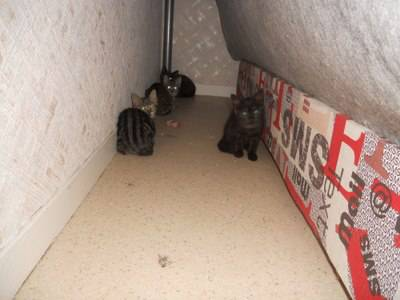 4 chatons trappes.jpg