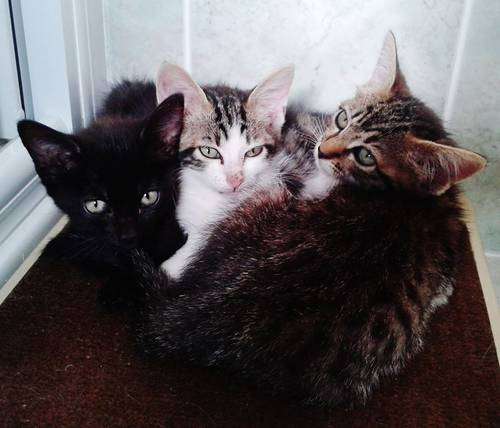 3 chatons trouves.jpg