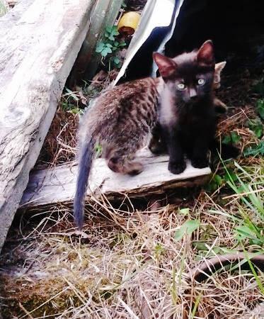 3 chatons trouvés.jpg