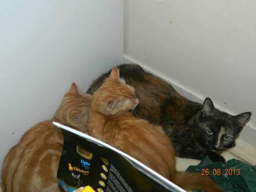 esmée et ces chatons4.jpg