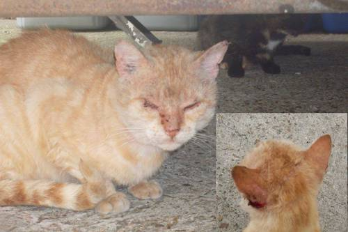 chat blessé2.jpg