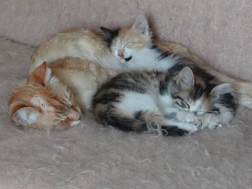 kiki et les chatons.jpg