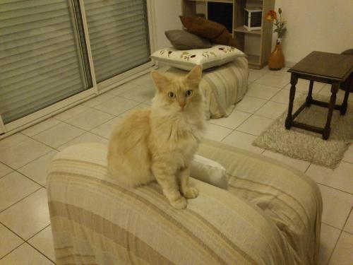 leon adopté2.jpg