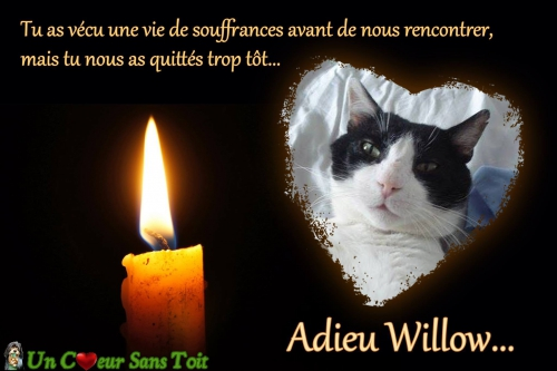 adieux willow.jpg