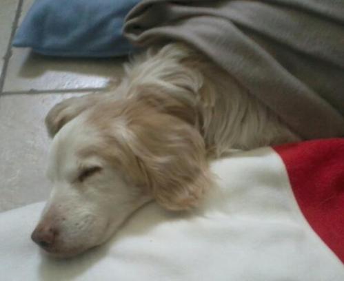 caramel chien4.JPG