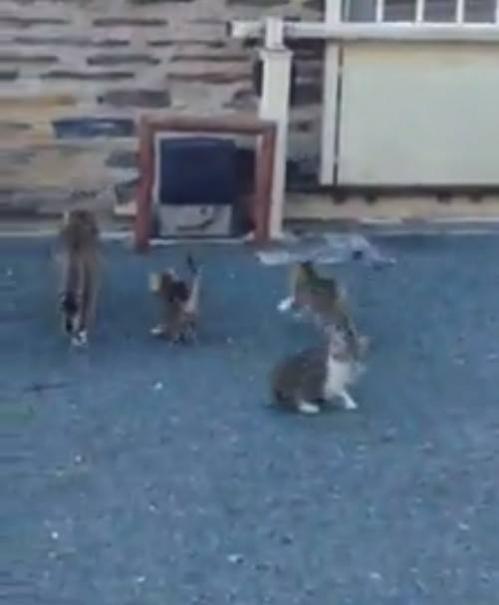 minette et ces 3 chatons.jpg